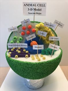 25 Ideas for science fair projects plants animal cell plants science 574912708682665207 Plant Cell Project Models, 3d Animal Cell Project, Edible Cell Project, Cell Model Project, Cell Project Ideas, 3d Plant Cell Model, 3d Animal Cell Model, 3d Cell Model, Cool Science Fair Projects