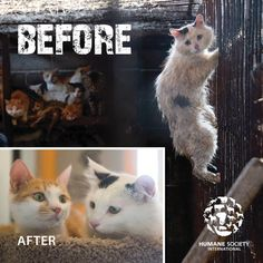 Infamous Yulin Cat Facing Certain Death Gets Miraculous Second Chance At Life…