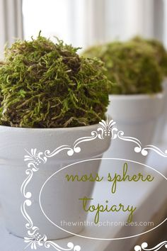 Adordable simple craft... could be great in those pots over the sink or a no-water way to add greenery to my desk at work! {DIY} MOSS SPHERE TOPIARY thewinthropchronicles.com