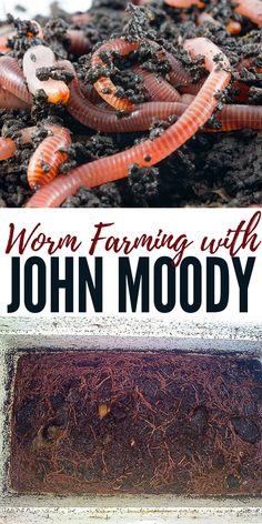 Composting Hacks garden Tips Soil - Worm Farming with John Moody. Greenhouse Farming, Backyard Farming, Organic Gardening, Gardening Tips, Container Gardening, Texas Gardening, Vegetable Gardening, Worm Farm Diy, John Moody