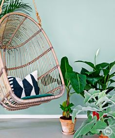 Give your home a botanical burst with a plenitude of plants – here are some that enjoy being indoors, and others that can be brought inside for a special occasion | photography christina kayser onsgaard/idecorimages.com