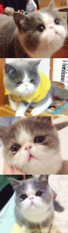 My boyfriend wants this kitty