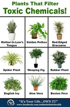 Indoor houseplants are a beautiful decoration in the home but they are much more… - Pflanzideen