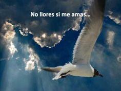 """""""No llores si me amas"""" (San Agustin) pescadordealma.org"""