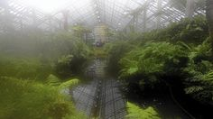 Garfield Park Conservatory's fern and desert rooms, as seen through a lens fogged by the humidity. The rooms in the Chicago landmark have reopened with new glass roofs and a combination of old and new plants.