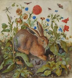 Hans Hoffmann (Nuremberg Prague) A hare among plants. Watercolour and bodycolour with gum arabic on vellum. x 58 cm. Estimate: This work is offered in Old Master & British Paintings Evening Sale on 8 December at Christie's in London Albrecht Durer, Roman And Williams, Thing 1, Plant Art, Illustrations, Tumblr, Old Master, Hare, Fine Art America