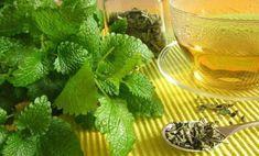 Using and Growing Lemon Balm - Recipes Lemon Balm Recipes, Lemon Balm Uses, Tea Recipes, Natural Cures, Natural Health, Herbal Remedies, Home Remedies, Sleep Remedies, Growing Lemon Balm