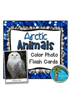Arctic Animals Color Photo Flash Cards and Headers