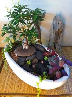 The Entries for The Great Annual Miniature Garden Contest Whew! We received a total of 63 entries for this year's Great Annual Miniature Garden Contest from all over the world. Many miniature…