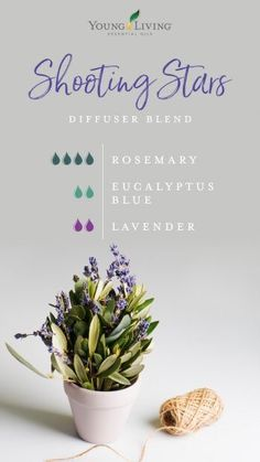 Shooting Stars Diffuser Blend: Clear the air so you can settle with a combo of Rosemary, Eucalyptus Blue, Lavender. Young Essential Oils, Essential Oils Guide, Lavender Essential Oils, Eucalyptus Essential Oil Uses, Essential Oil Combinations, Essential Oil Diffuser Blends, Relaxing Essential Oil Blends, Purifier, Diffuser Recipes