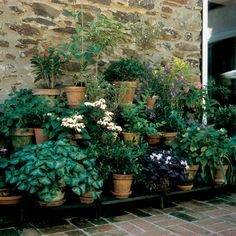 Green Baked Enamel over Steel Components. Room for Plants to Flourish. Outdoor Shelves, Outdoor Pots, Outdoor Living, Oakland Park, Plant Supports, Tiered Stand, Plant Stands, Terracotta Pots, Garden Projects