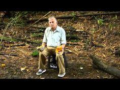Triglicéridos y colesterol derrotados con fórmula indígena - YouTube