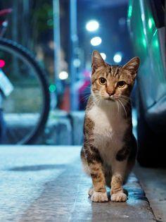 "cat <span class=""EmojiInput mj230"" title=""Black Heart Suit ♥""></span>"