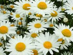 One of mum's favourite flowers