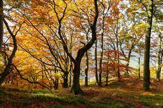 Im Herbst machen alleine die Farben Lust aufs Wandern