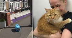 Cat Found On Street With His Belongings Meows to a Kind Person for Help...