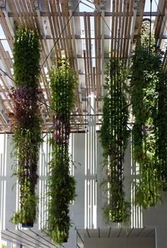 Perez Art Museum vertical #gardens, Miami. YES, I'M OBSESSED.