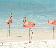 Inspiring picture beach, flamingo, ocean, pink, summer. Resolution: 500x375 px. Find the picture to your taste!