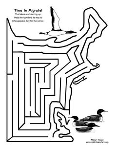 Time to Migrate Maze