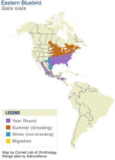greater roadrunner range map info on roadrunner habitat food nesting native american. Black Bedroom Furniture Sets. Home Design Ideas