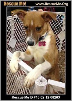 ― Pennsylvania Mutt Rescue ― ADOPTIONS ―RescueMe.Org