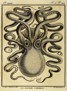 Octopus/Kraken Front View  Historic Art Print/Poster - Giclee Art Print - Wall Hanging