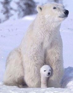 Cute composition for polar bears painted rocks
