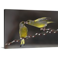 Found it at Wayfair - Love on a Branch by Tomas Sereda Photographic Print on Canvas
