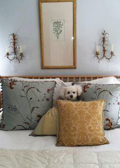 Bichon Frise. My Bichon Bonnie loves to do the same exact thing. She loves pillows!
