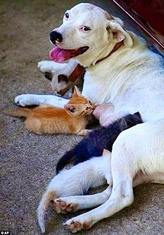 Step mother...Dog and kittens