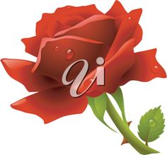 iCLIPART - Royalty Free Clip Art Image of a Red Rose