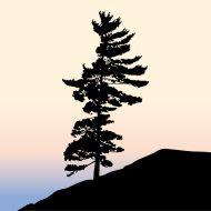 stock-illustration-7397576-pine-tree-silhouette.jpg (190×190)