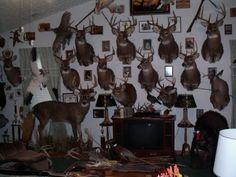 Trophy Rooms Deer Shoulder Mount, Taxidermy Display, Gun Rooms, Trophy Rooms, Deer Skulls, Endangered Species, Antlers, Vignettes, Hunting Rooms