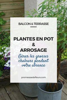 L'arrosage des plantes en pot : gérer les grosses chaleurs pendant votre absence Pot Jardin, Pot Plante, Tips & Tricks, Permaculture, Horticulture, Potted Plants, Perennials, Green, Gardening