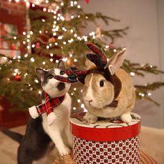 Christmas bunny and cat @henryandjonas