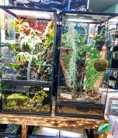 Make it pretty and pleasant! 🤗 We have everything you need to make your reptile's environment one that they will love. Come see us in store or visit our online boutique! #MagazooReptiles Scorpion, Serpent, Reptile Accessories, Reptile Enclosure, Reptiles, Aquarium, Environment, Boutique, Pretty