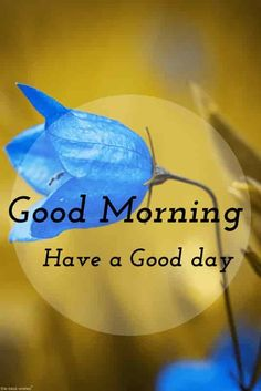 good morning pictures for whatsapp with blue flower Good Morning Picture Messages, Cute Good Morning Pictures, Good Afternoon My Love, Good Morning Poems, Good Morning Greeting Cards, Good Morning Romantic, Lovely Good Morning Images, Good Morning Nature, Good Morning Dear Friend