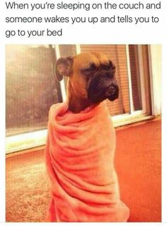 20 Funny Animal Memes That'll Make You Roar With Laughter 20 lustige Tiermemes, die dich vor Lachen brüllen lassen - Lovely Animals World Memes Estúpidos, Funny Dog Memes, 9gag Funny, Crazy Funny Memes, Really Funny Memes, Stupid Funny Memes, Funny Laugh, Funny Relatable Memes, Funny Stuff