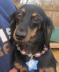 ADOPT ME ... Friends of Homeless Animals, Inc. ...Providence, RI