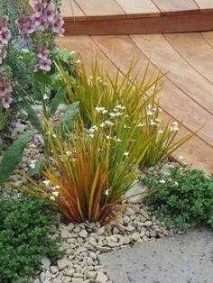 Go Gardening - Helping New Zealand Grow - Garden Inspiration, tips and advice from the expert Tropical Garden, Garden Landscape Design, Plants, Garden Help, Native Plants, Outdoor Gardens, Native Garden, Garden Inspiration, Coastal Gardens