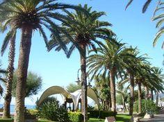 #palmtree #pietraligure #liguria
