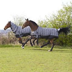 Elico Snowdon Check 300g Combo Turnout Rug: £76.99 - FREE Delivery