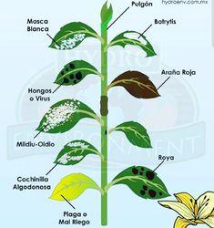 Eco Garden, Forest Garden, Love Garden, Edible Garden, Garden Plants, Regrow Vegetables, Planting Vegetables, Growing Vegetables, Growing Plants