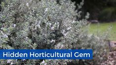 Shoalhaven Heads Botanic Gardens | 12.6.20 | Hidden Horticultural Gem Native Plants, Botanical Gardens, How To Dry Basil, Plant Based, Gems, Instagram, Gemstones, Rhinestones, Emerald