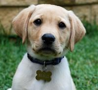 Puppies, Cute Puppy Names, Pictures of Puppies & More | Daily Puppy
