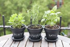 Paint clay pots with chalkboard paint and then label for herb garden.  Love this!
