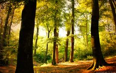 Beech Tree Forest (Wuppertal, Germany)