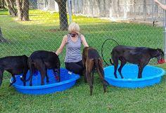 Greyhound Adoption League of Texas, Inc. Grey Hound Dog, Adoption, Texas, Dogs, Foster Care Adoption, Pet Dogs, Doggies, Texas Travel