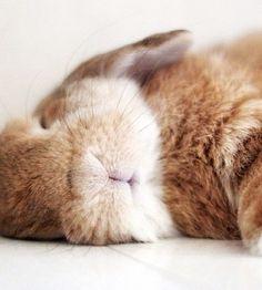 /(>'.'<)\Bunny Nap