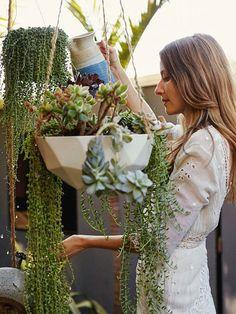 "houseplant: string of pearls ""Senecio rowleyanus"""